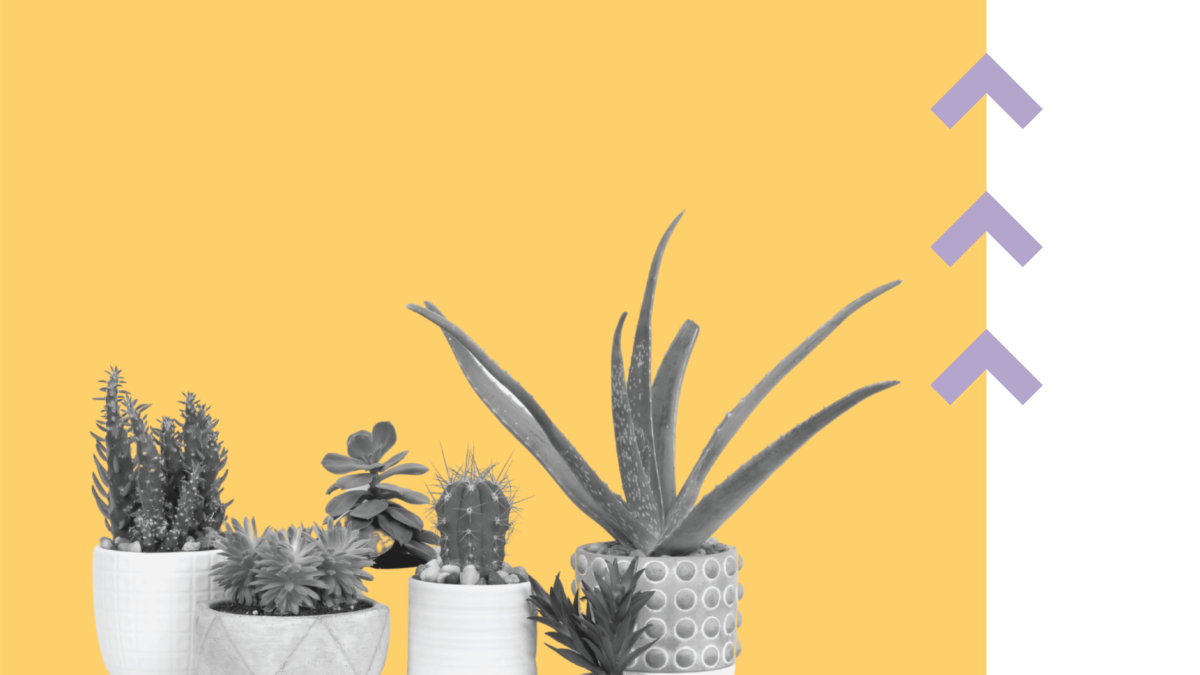 8 Benefits Of House Plants Helping Your Mental Health